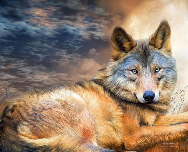 Mixed Media - Wolf In Moonlight by Carol Cavalaris