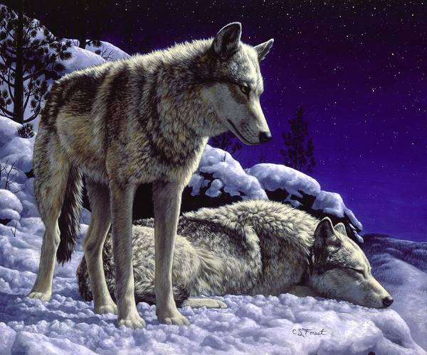 Blue Sky Wall Art - Painting - Wolf Painting - Night Watch by Crista Forest