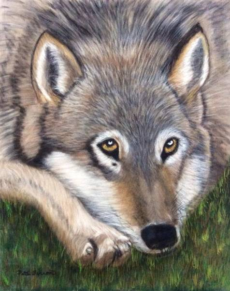 Art Print featuring the painting Wolf by Patti Ferron