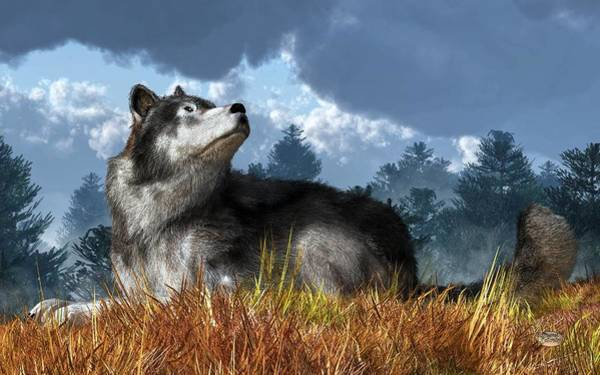 Susi Wall Art - Digital Art - Wolf Resting In Grass by Daniel Eskridge