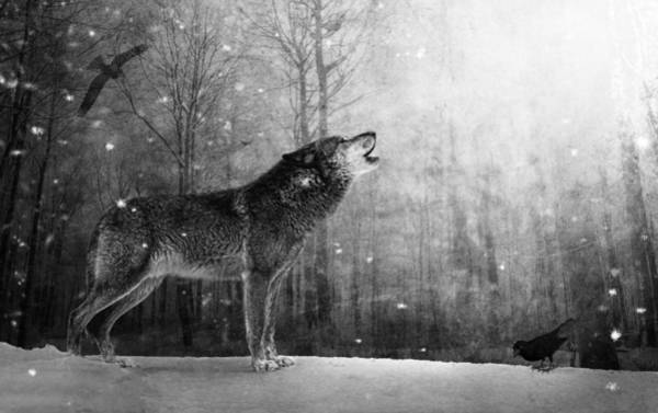 Photograph - Wolfheart by Marc Huebner
