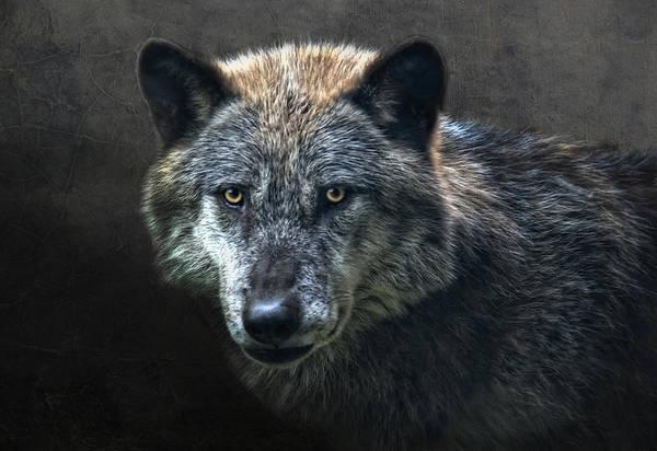 Timber Photograph - Wolfman by Joachim G Pinkawa