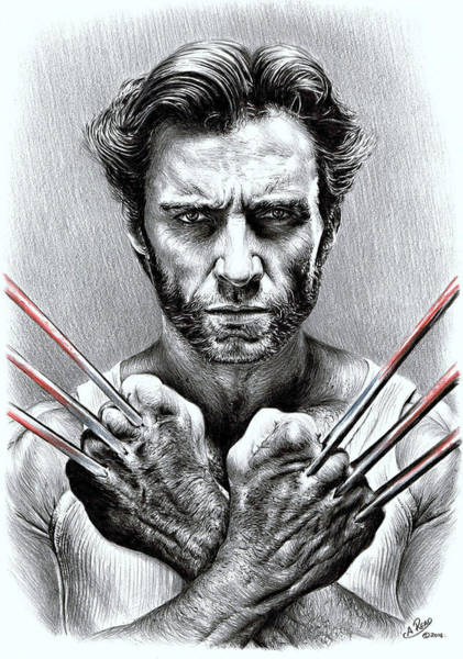 Wolverines Drawing - Wolverine by Andrew Read
