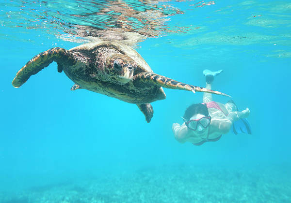 Underwater Diving Photograph - Woman Diving With A Hawksbill Sea by 4fr