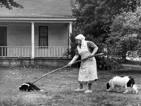 Skunk Photograph - Woman Gently Moves A Skunk by Underwood Archives