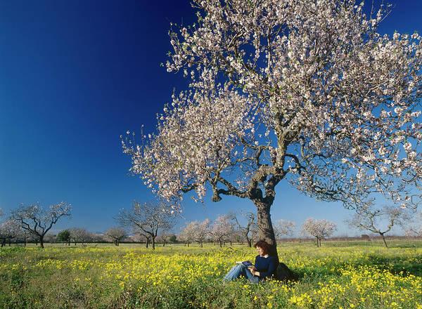 Woman Sitting Under Blooming Almond Art Print