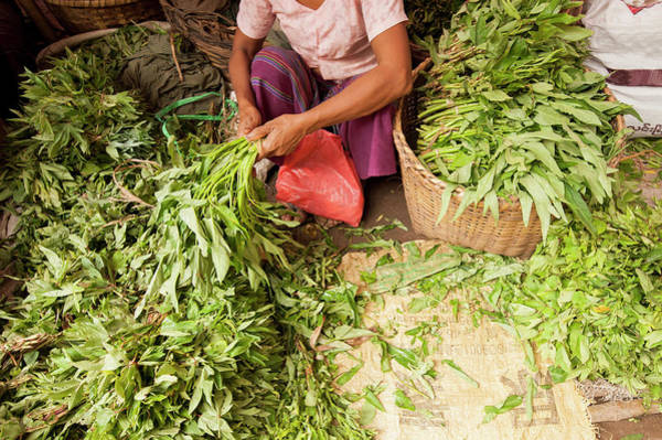 Myanmar Photograph - Woman Sorting Vegetables At Local by Cultura Rm Exclusive/yellowdog