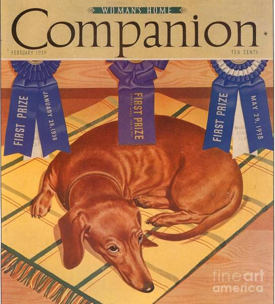 Nineteen-thirties Wall Art - Drawing - Womans Home Companion 1930s Usa Dogs by The Advertising Archives