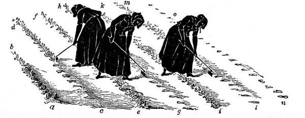 Rotation Wall Art - Photograph - Women Thinning Turnips by Universal History Archive/uig