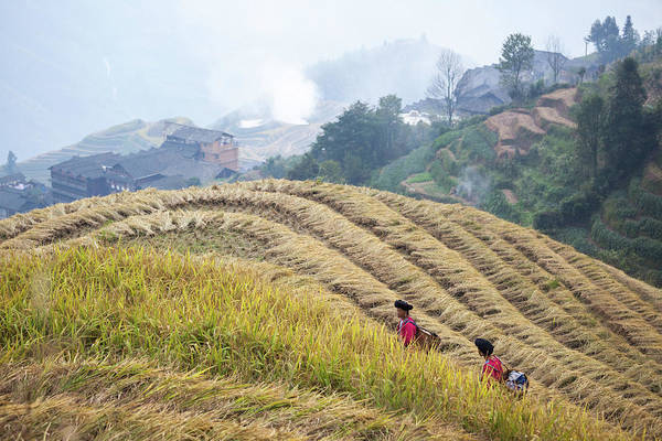 Chinese Clothing Wall Art - Photograph - Women Walking On Rice Terraces by Matteo Colombo
