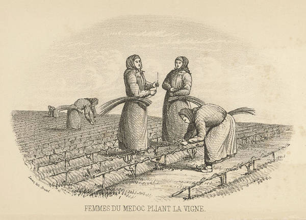 Wall Art - Drawing - Women Workers Twisting  The Vines by Mary Evans Picture Library