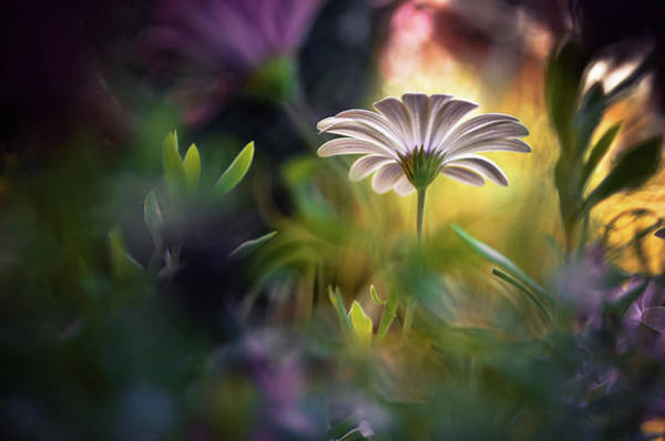 Garden Photograph - Wonderland by Maxime Dugenet