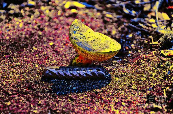 Wall Art - Photograph - Wonderland Worm by Al Powell Photography USA