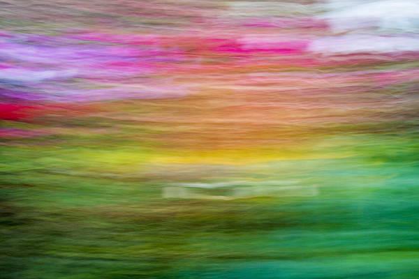 Camera Raw Photograph - Wonderment by Steve Belovarich