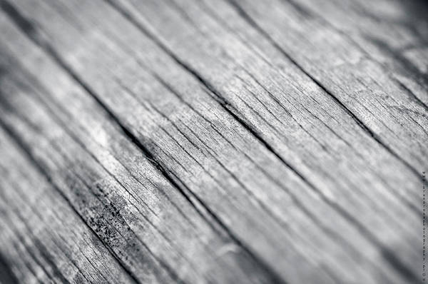 Photograph - Wood by Bruno Rosa