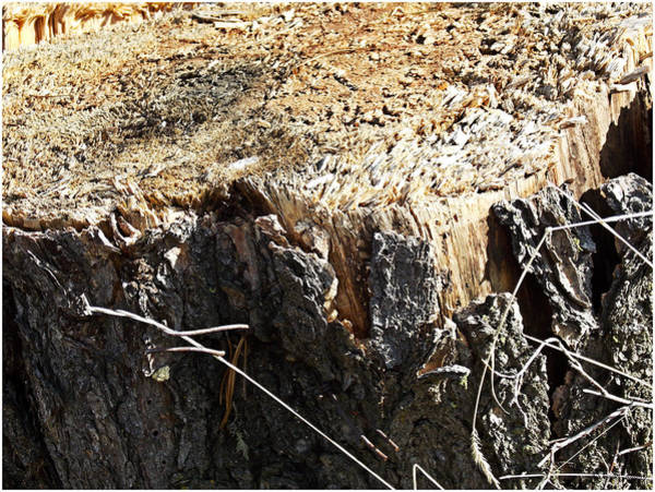 Photograph - Wood Crystals by Susan Kinney