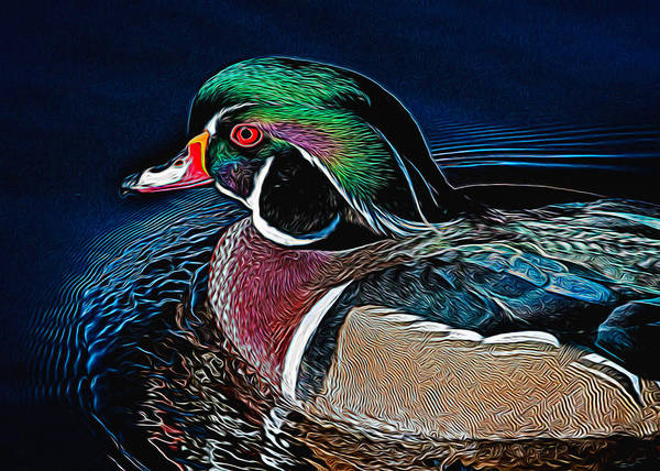 Wall Art - Photograph - Wood Duck by Dawn Key
