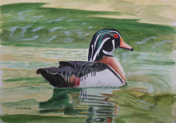 Painting - Wood Duck by Jill Ciccone Pike