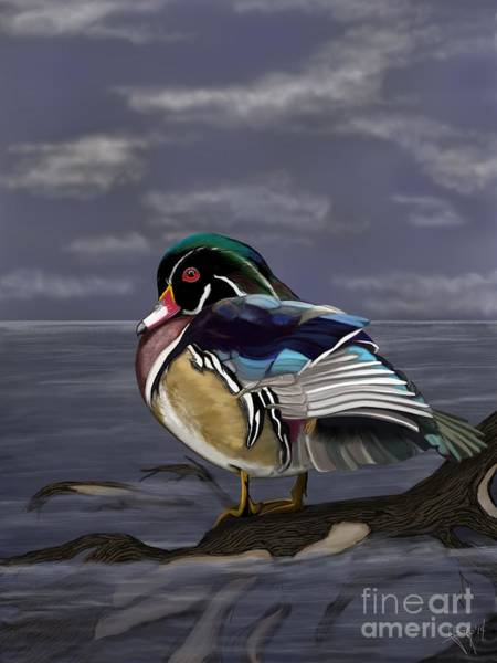 Duck Hunting Drawing - Wood Duck by Lisa Estep
