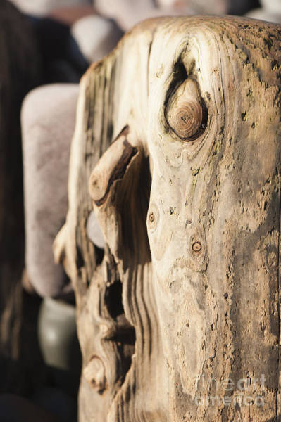 Bristol Channel Photograph - Wood Face by Anne Gilbert