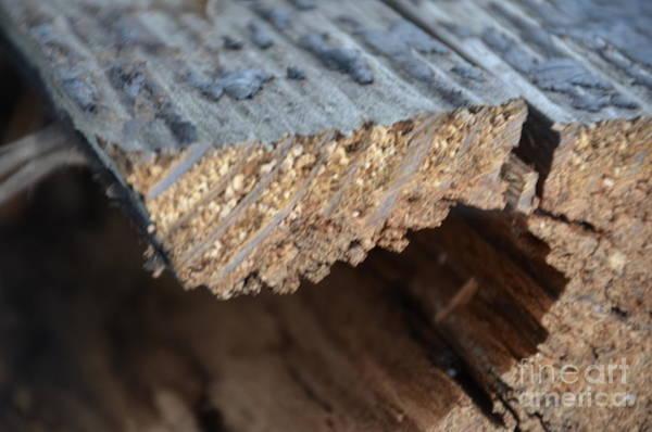 Photograph - Wood Grain by Randy J Heath
