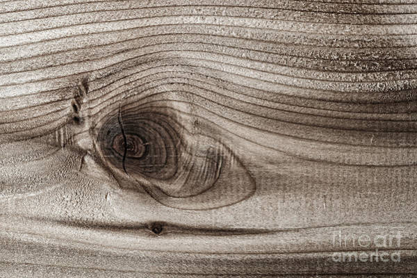 Photograph - Wood Knot Abstract by Elena Elisseeva