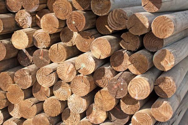 Photograph - Wood Logs by Gunter Nezhoda