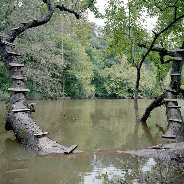 Tree Climbing Photograph - Wood Steps Climb A Tree Trunk To A Rope by David Hanson
