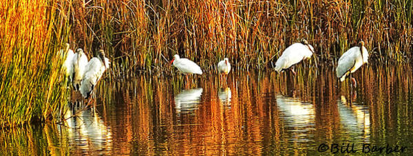Wood Storks And 2 Ibis Art Print