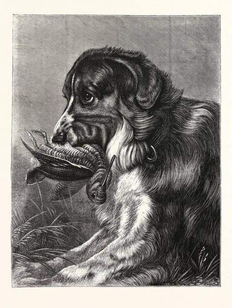 Wall Art - Drawing - Woodcock-shooting, Hunt, Hunting, Dog by English School
