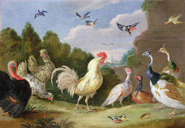 Poultry Photograph - Wooded Landscape With A Cock, Turkey, Hens And Other Birds, 17th Century Oil On Canvas by Jan van, the Elder Kessel