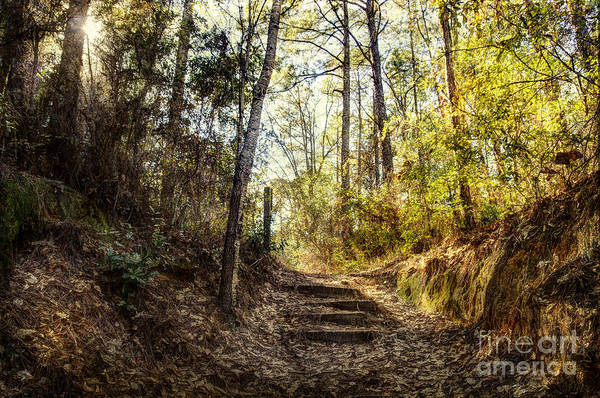 Wall Art - Photograph - Wooded Path by Joan McCool