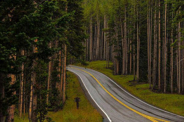 Photograph - Wooded Road by Harry Spitz