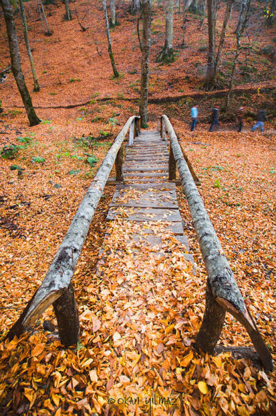 Photograph - Wooden Bridge by Okan YILMAZ