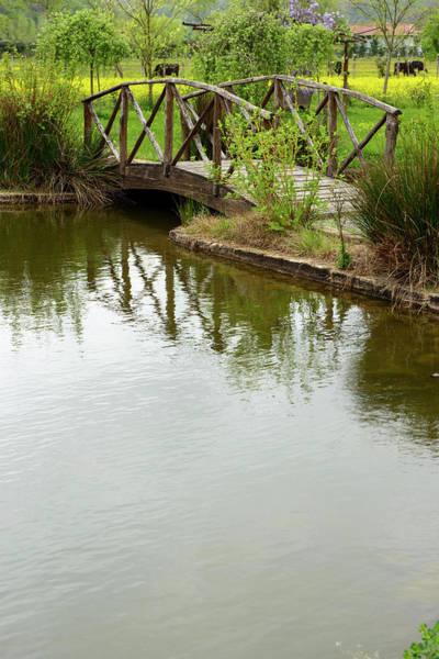 Ornamental Grass Photograph - Wooden Bridge by Omersukrugoksu