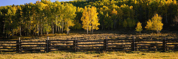 Telluride Photograph - Wooden Fence And Aspen Trees by Panoramic Images