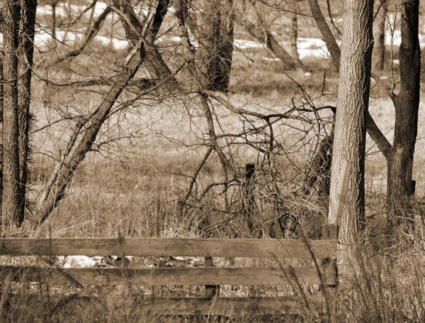 Digital Art - Wooden Fence In The Woods by Kirt Tisdale