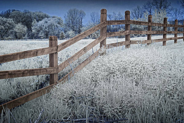Photograph - Wooden Fence Of A Friesian Horse Pasture On Windmill Island by Randall Nyhof