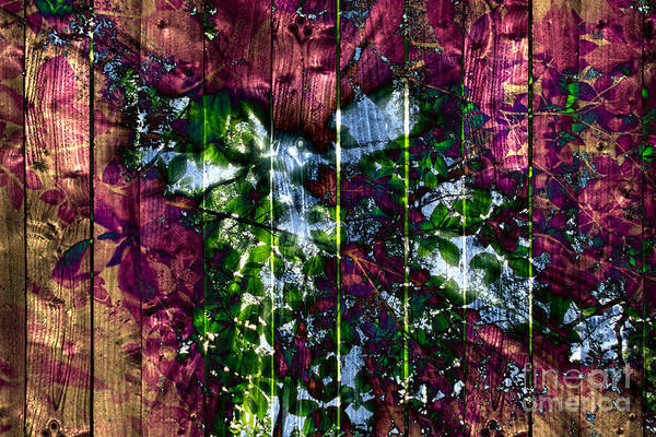 Photograph - Wooden Planks And Sunlight Streaming Through Leaves II by Beverly Claire Kaiya