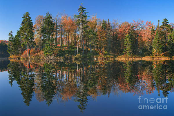 Photograph - Woodford Pond Morning by Charles Kozierok