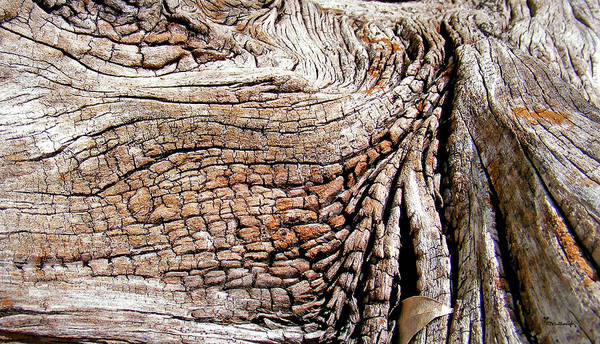 Photograph - Woodgrain On Old Log by Duane McCullough