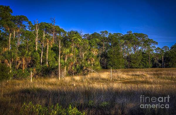 Marshland Photograph - Woodland And Marsh by Marvin Spates