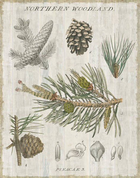 Pine Needles Painting - Woodland Chart IIi by Sue Schlabach