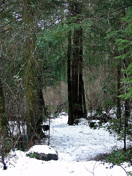 Vancouver Mixed Media - Woodland Dawn by Janet Ashworth