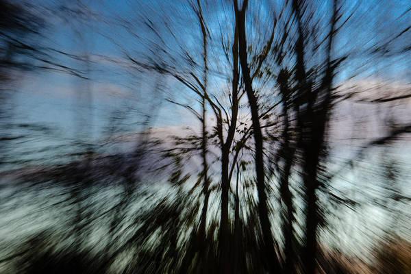 Photograph - Woodland Flight by Jennifer Kano