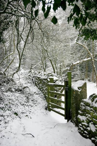 Wall Art - Photograph - Woodland Garden In Winter by Stephen Harley-sloman/science Photo Library