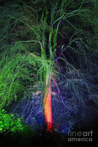 Yggdrasil Photograph - Woodland Realm by Tim Gainey