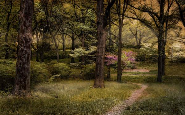 Photograph - Spring Awakening by Robin-Lee Vieira