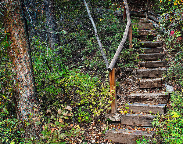 Coppice Photograph - Woodland Stairs In Aspen Colorado by Julie Magers Soulen