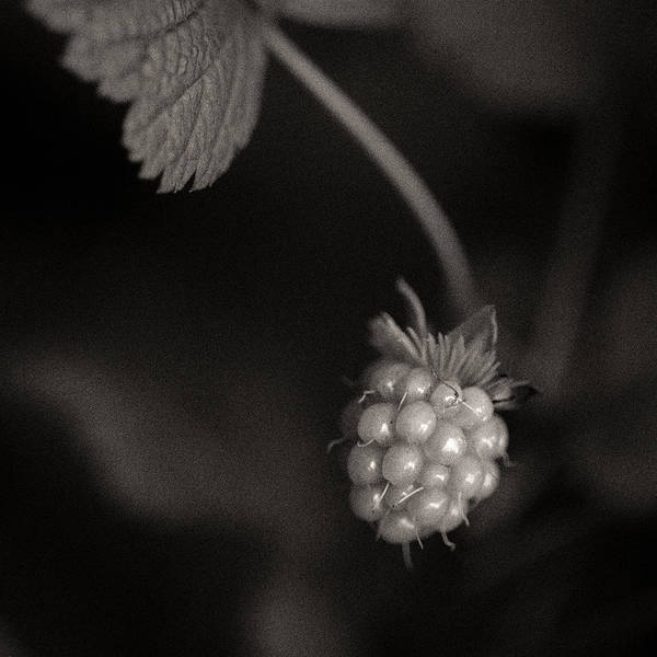 Photograph - Woodland - Study 10 by Dave Bowman